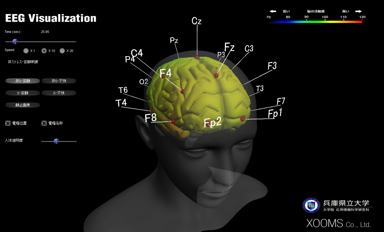 brain-vis2